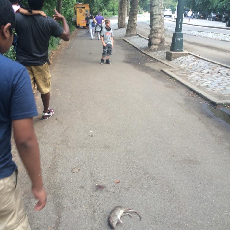 5th avenue rat